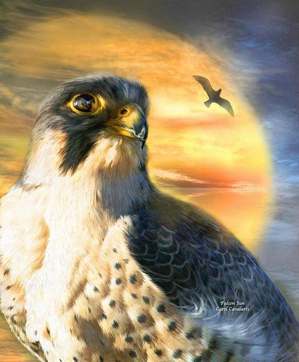 Fény madár